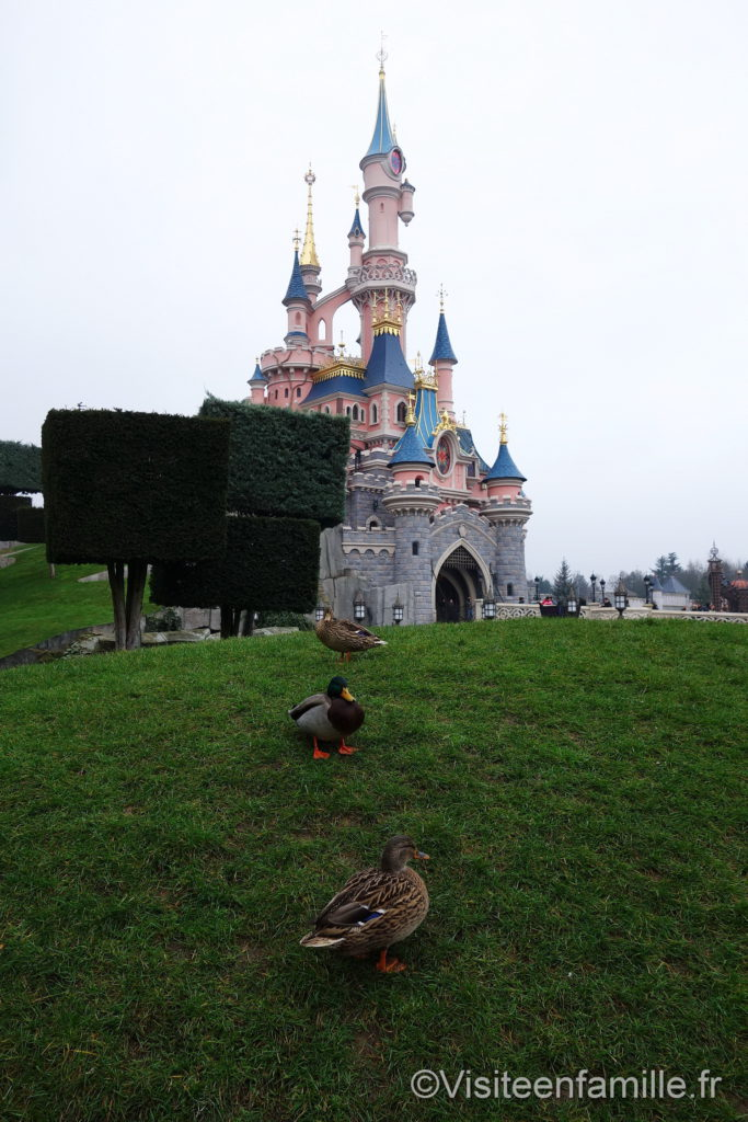 Pleins de canards devant le chateau Disneyland Paris