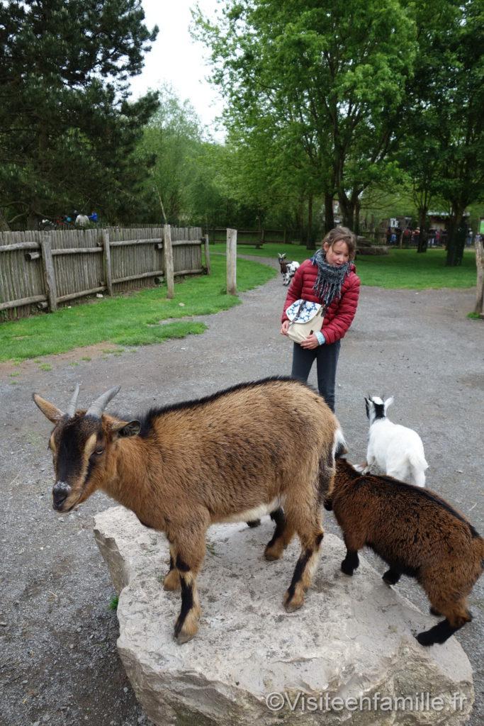 Des chèvres au parc de Sainte-Croix