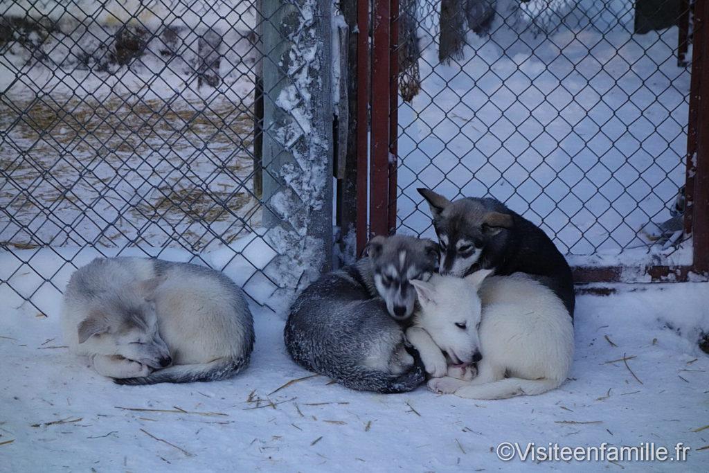 bebes-chiens