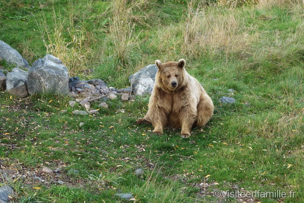 Ours brun au parc de Sainte-Croix