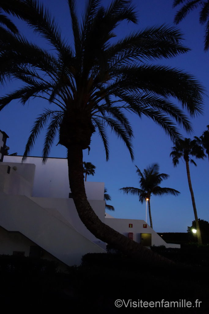 Arbre dans Hôtel Riu Paraiso