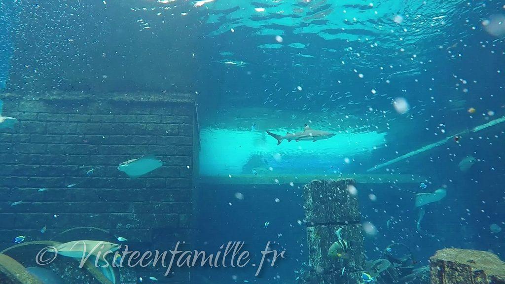 Shark safari dubai