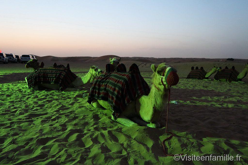 4x4 extreme safari camel