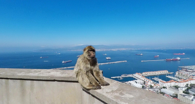 singe avec vue sur la mer à Gibraltar