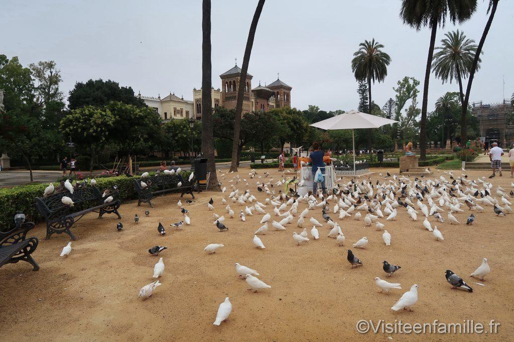 Pleins de pigeons sur la Plaza de América de Séville