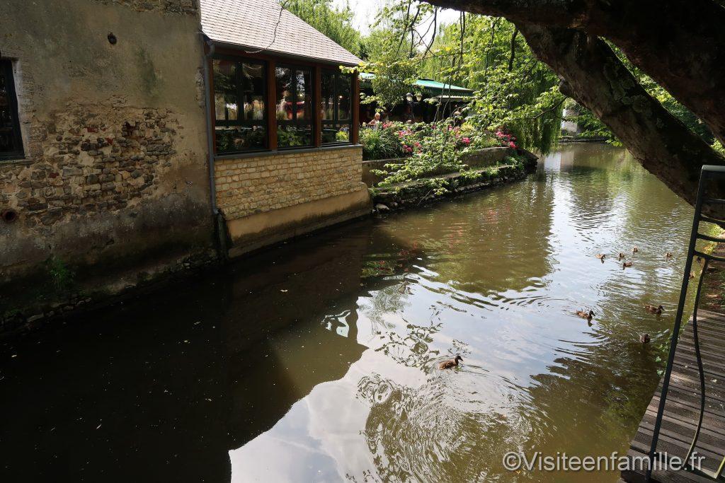 famille de canards sur la rivière de bayeux