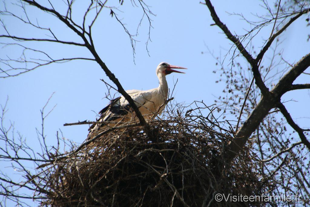 nid de cigogne du parc sainte croix