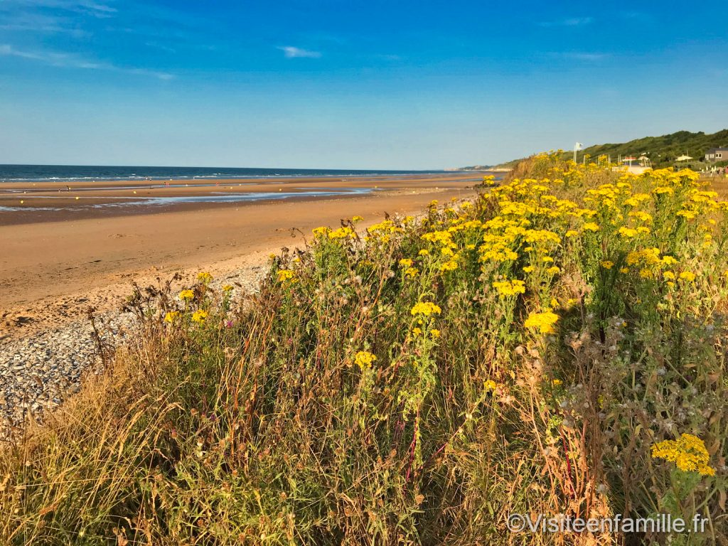 Omaha beach et champs de fleurs