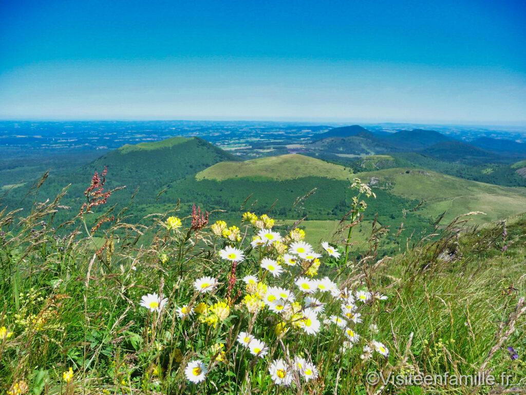Fleurs au Puy de Dôme