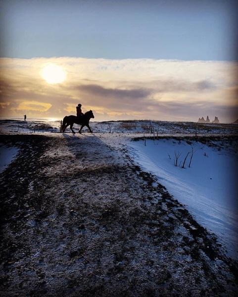 cheval sur la plage de sable noir à vík í mýrdal islande